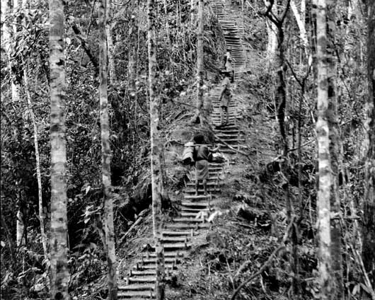 The 'Golden Stairs' that rose to the top of Imita Ridge (AWM 026837).
