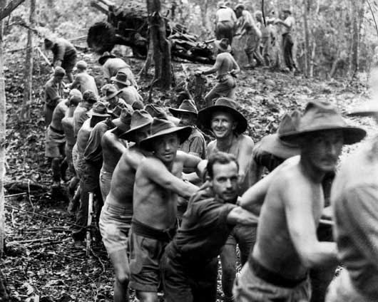 25-pounder guns of B Troop, 14th Field Regiment, being pulled through dense jungle on the Kokoda Trail (AWM 026855).