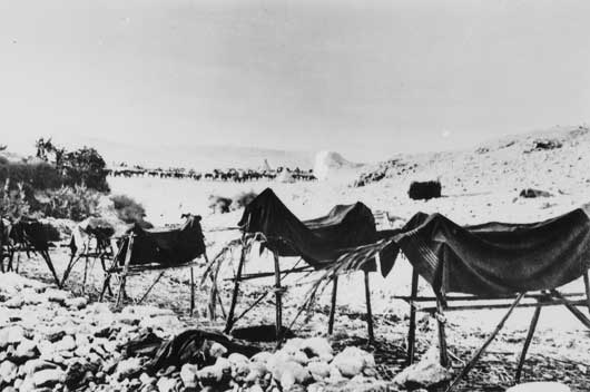 A row of dummy horses, designed to mislead enemy airmen, at a camp in the Jordan Valley (AWM B02667).